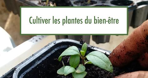 banniere_bien_être_lauriane.png