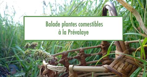 banniere_ballade_plantes_com.png