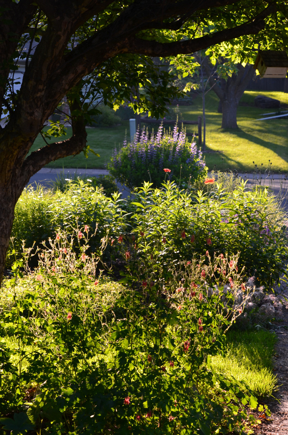 Morning sun bathes the front garden
