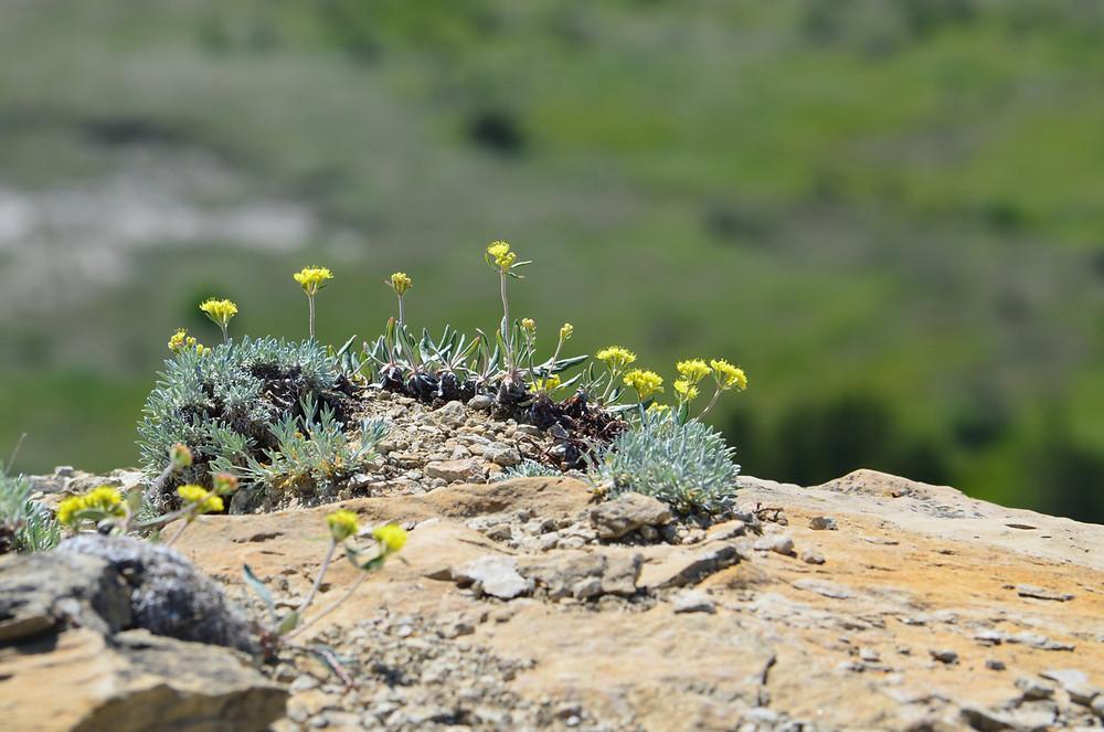 wild flowers on rock