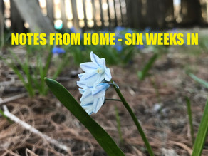 Notes from Home - Six Weeks In