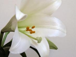 EAT, WRITE, DIGEST: Spring Hiatus