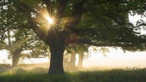 Faith: In Foundations