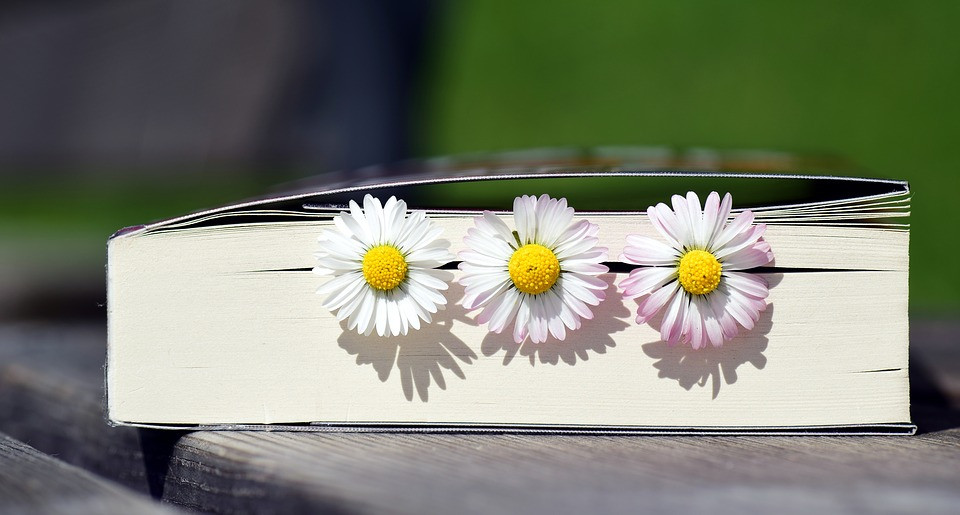Image of book with daisies between pages