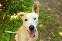 Arrow - ADOPTED!