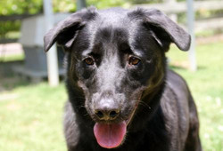 Julio - ADOPTED!