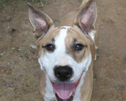 Candy - ADOPTED!