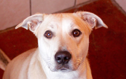 Oreck - ADOPTED!