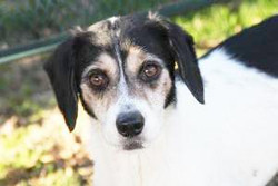 Adele - ADOPTED!