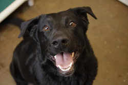 Axel - ADOPTED!