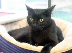 Notte - ADOPTED!
