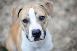 Cutty - ADOPTED!