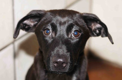Echo - ADOPTED!