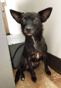 Small Fry - ADOPTED!