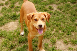 Trapper - ADOPTED!