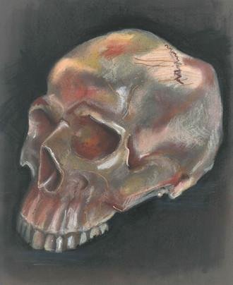 Skull - Charcoal/Pastel Pencil