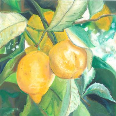 Lemons - Oil Pastels