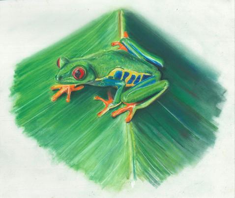 Tree Frog - Pastel Pencil