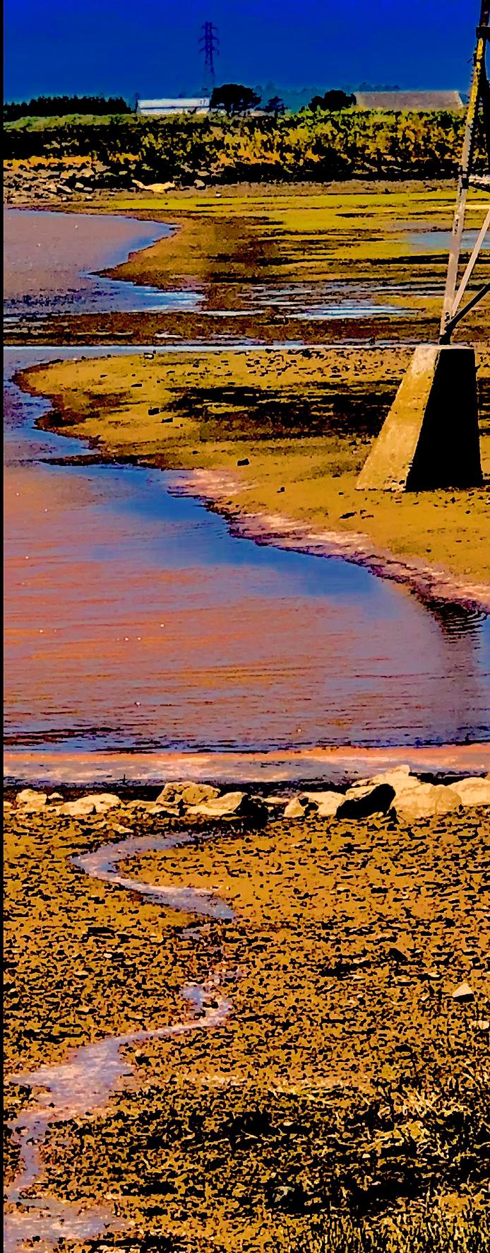 Arcata Marsh 1