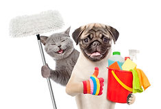 Cleaning concept. Cat and dog holds buck