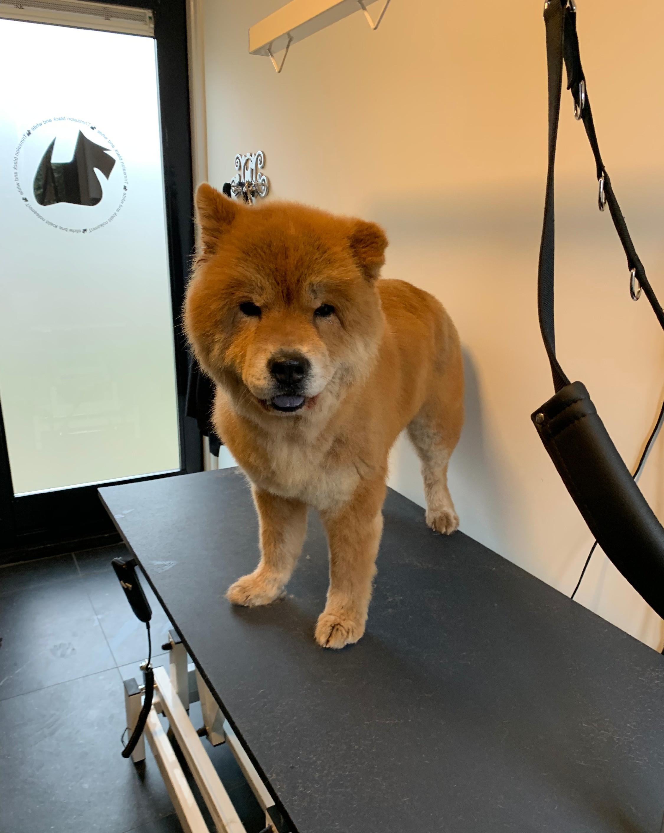 Trimbeurt voor grote honden