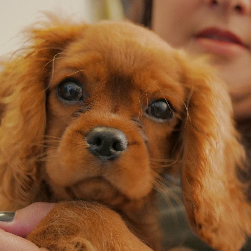 Trimbeurt voor hele kleine honden