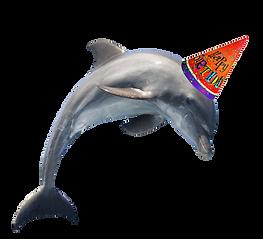 PNGPIX-COM-Dolphin-PNG-Transparent-Image