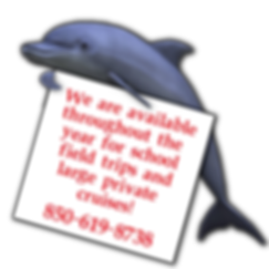 DOLPHIN INFO.png