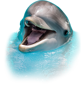 sea-screamer-dolphin-tours-clearwater-gu