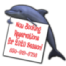 DOLPHIN INFO now booking.png