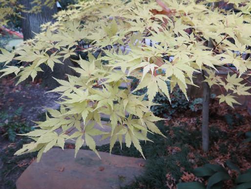 Favorite Fall Foliage