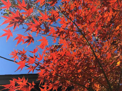 Fall Foliage - Part II