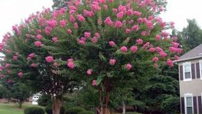 Plant a Free Tree