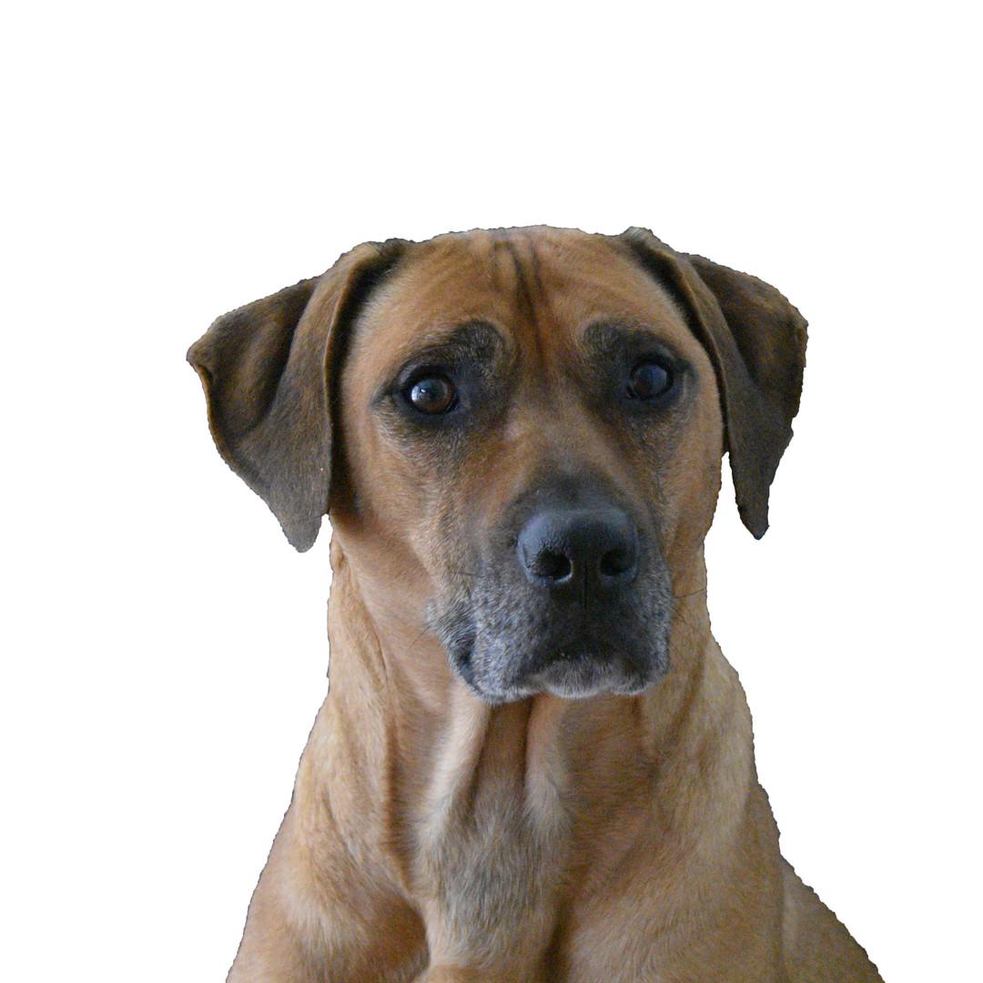 """Dr. T's Dog """"Kholt"""""""
