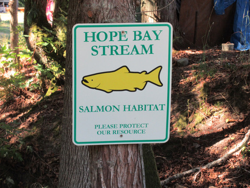 Summary of the Hope Bay Salmon Stream Project