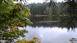 Nature Walk to Roe Lake: Wednesday, Oct 20, 2021