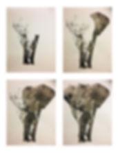 puneet elephant process.jpg