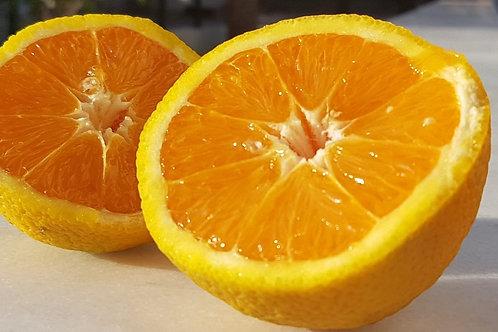 Sıkmalık Gökova Portakalı