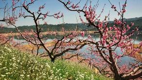 Puisi Li Bai: 贈汪倫 (Zeng Wanglun)