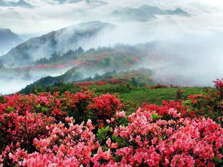 Puisi Li Bai: 山中問答 (Tanya Jawab di Atas Gunung)