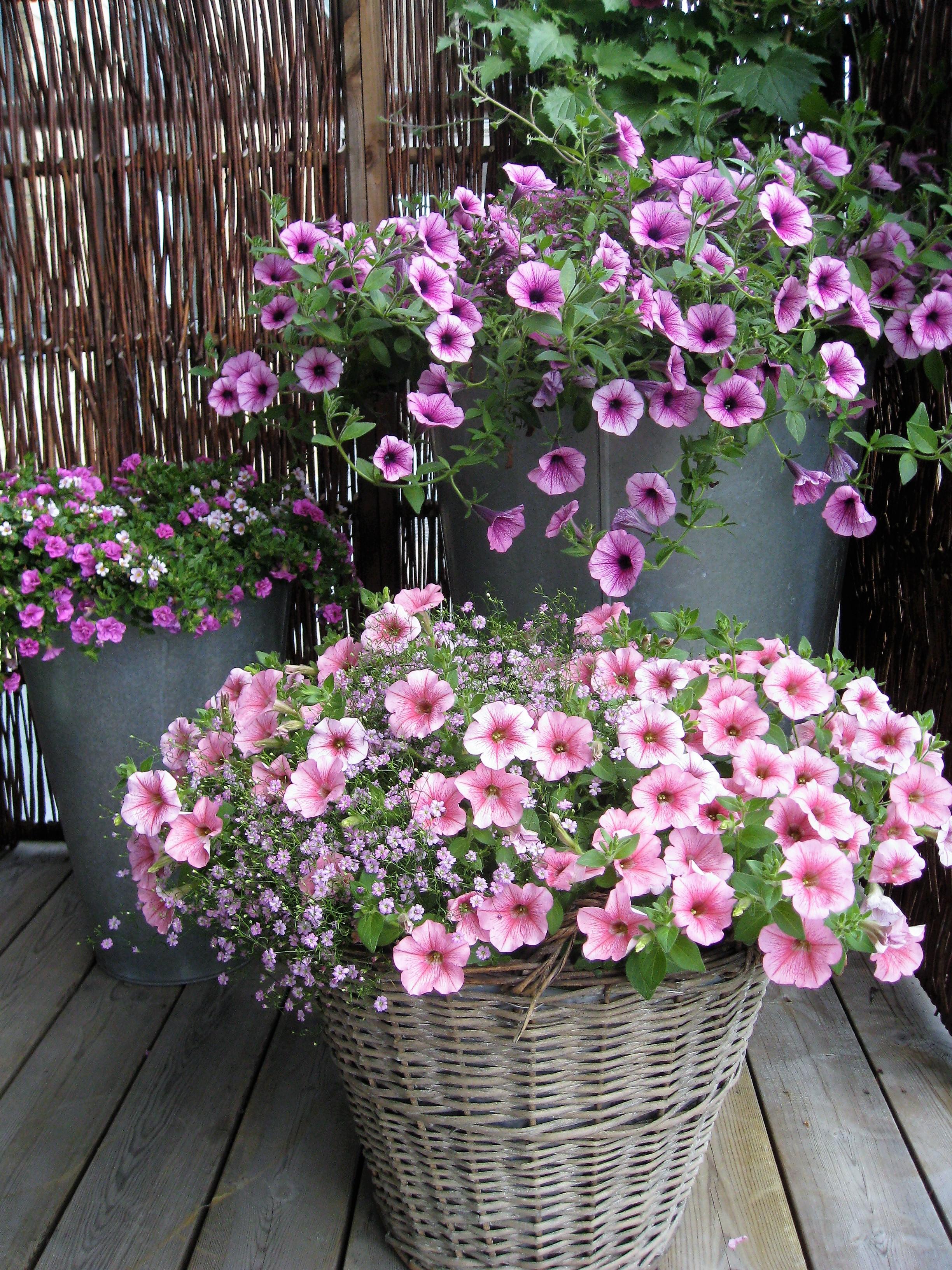 Ferdig-planta-krukker_LilleskagenAS