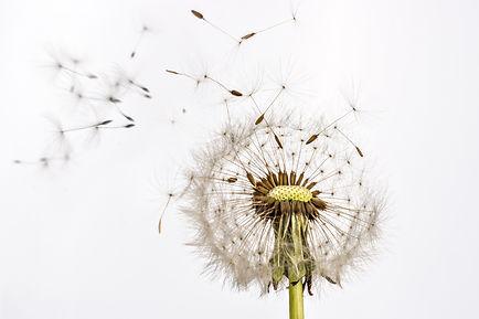 Allergievrije vega, inspiratie over allergievrij leven! Geen gluten, soja, koemelk, pinda, selderij, lupine, etc. Vegetarisch leven en koken.