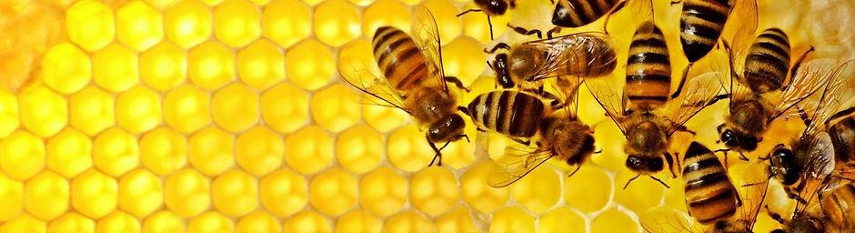 H&H Bees background.jpg