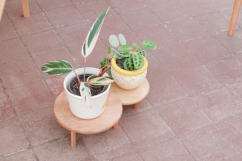 Base Plantas