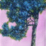 'Pine' - Henrik Simonsen - Artizan Editi
