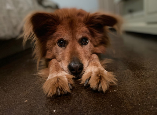 Three Ways Pets Can Help Ease Chronic Illness