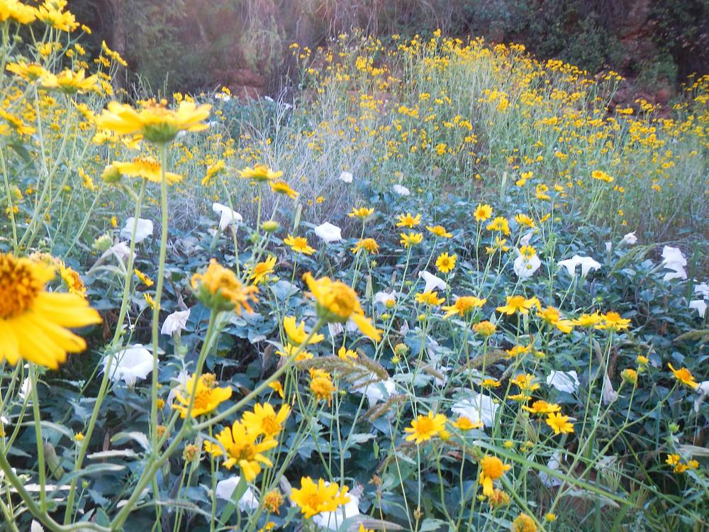 The Little Garden opens its doors in Sedona Arizona for spiritual ACIM immersive retreats.