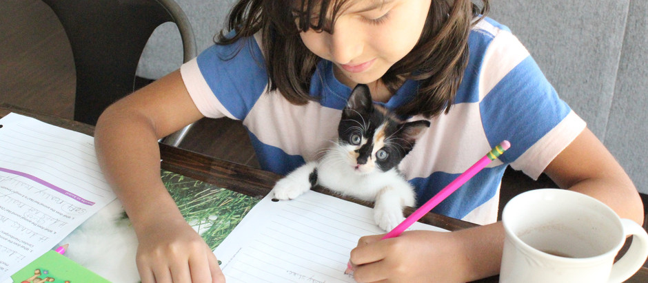 From Public School to Homeschool: 10 Things You Need to Know (Video)