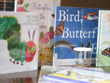 Teaching Your Child to Read: What You Need to Know