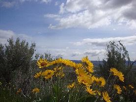 Wenatchee Natural Landscape